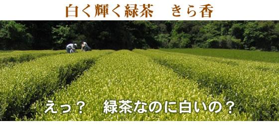 新品種・きら香 【茶】